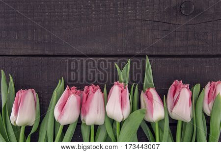 Frame Of Tulips On Dark Rustic Wooden Background With Copy Space For Message. Spring Flowers. Greeti