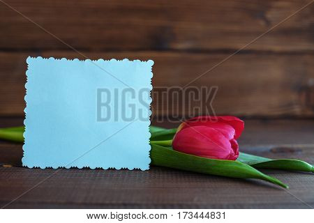 Welcome card and tulip on a dark wooden background. Concept of holiday birthday Easter March 8.
