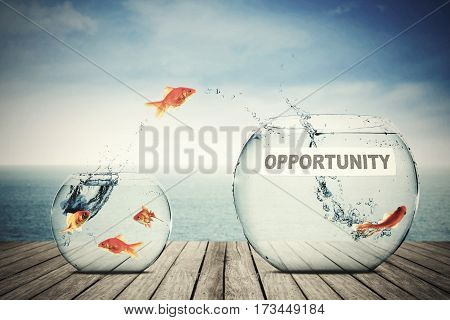 Picture of golden fish flying out to better aquarium with opportunity text concept of better opportunity