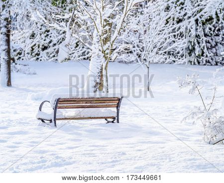 Beautiful snow in winter park with bench. Vancouver. Canada.