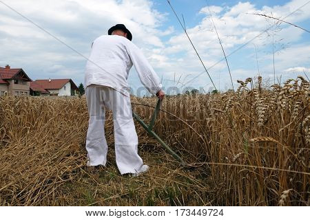 TRNOVEC, CROATIA - JULY 09, 2016: Farmer harvesting wheat with scythe in wheat fields in Trnovec, Croatia on July 09, 2016.