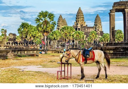 A horse at the Angkor Wat temples in Cambodia