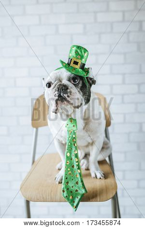 Dog in disguise for St. Patrick's Day