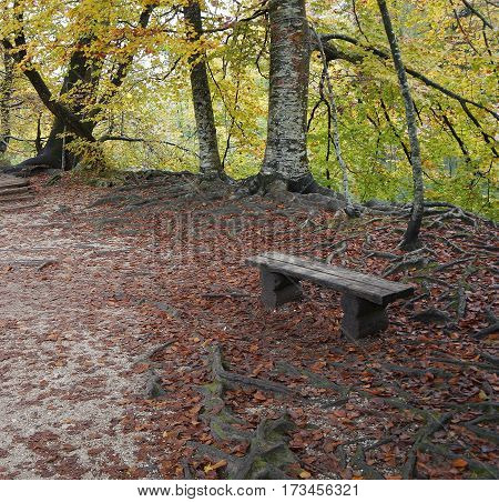 Lonely bench in Plitvice national park, Croatia