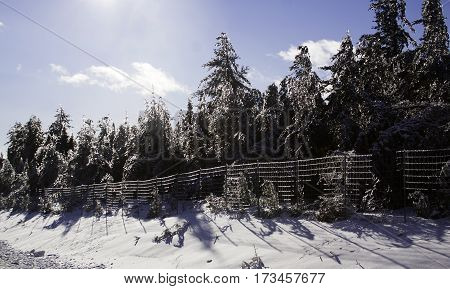 Winter snow scene of an ice coated fence holds back a rows of fir trees covered in thick glittering ice and snow in the background from a recent ice storm along the highway to Miramichi, New Brunswick Shot on a chilly bright blue sky sunny day in February