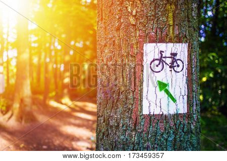 Forest Bike Trail Painted Sign on the Large Tree. Summer Recreation. Biking Theme.