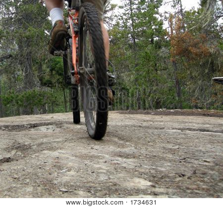 A mountain bike rider crosses a rock in the forest. poster