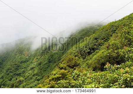 Rainforest landscape view in Monteverde Costa Rica