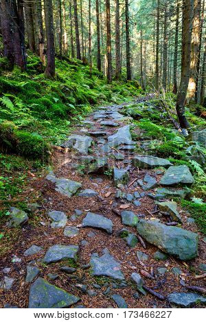 Mountains pathway in green forest