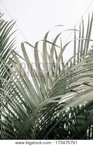 Tropical palm branches near beige wall. Minimalistic floral background.