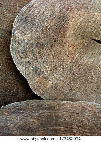 portrait shot of three timber or wooden cut discs