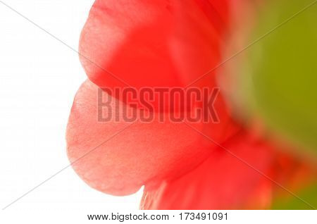 Soft red flower. Close up of the red Balsaminaceae petals.