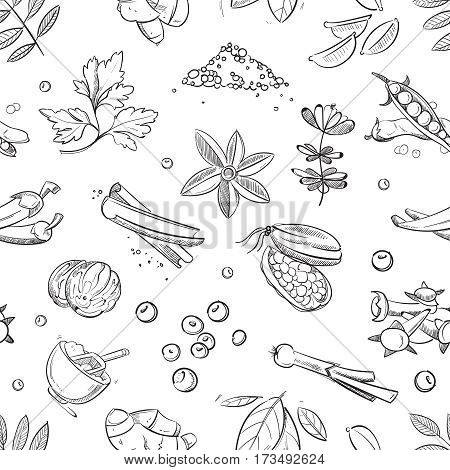 Fresh herbs and spices doodle hand drawn. Vector seamless pattern with herbs and spice, illustration of sketch nature spices