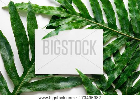 Tropical botanical background with a space for a text view from above