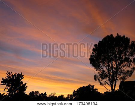 High cirrus clouds turning pink, gold, blue as sun sets; silhouetted   plants on lower border, lots of copy space.
