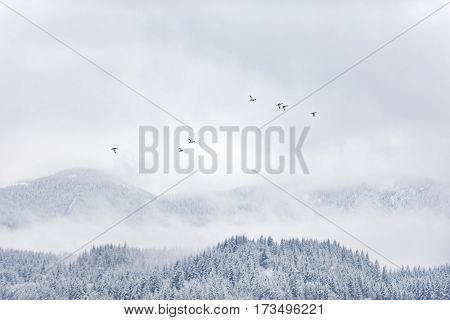 Game birds floating around sky above stunning pine wood in Oregon state