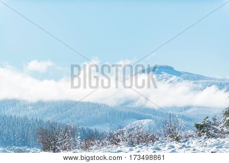Pleasant outlook over endless pine wood stretching along mountain in United States