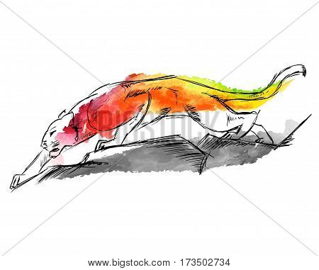 Young Cougar prepares to jump. Sketch. Hand-drawn vector illustration in watercolor drawing style