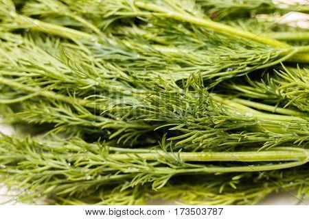 Green Sprigs Of Fresh Dill