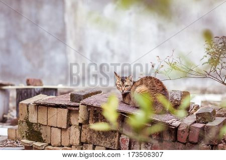 Cat is resting alone in backyard afternoon