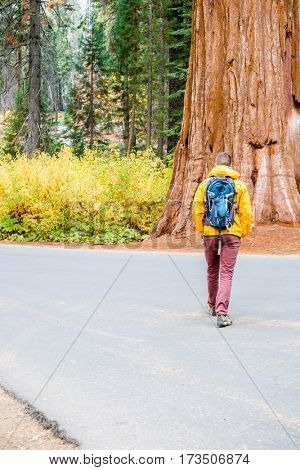 Tourist with backpack hiking in Sequoia National Park. California, United States.