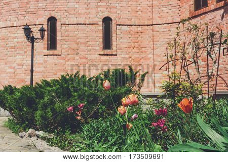 Red and pink tulips in summer garden near castle. Landscape design. Flowerbed and evergreen bushes.