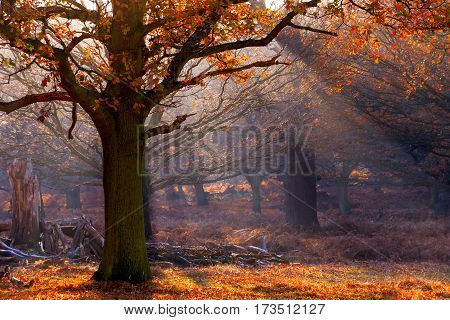 Rays Of Sunlight Pouring Through Woods