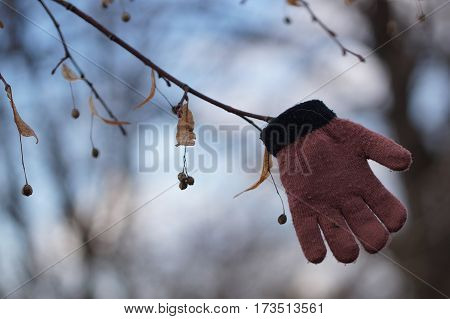 Lost glove hanging on a branch ending winter