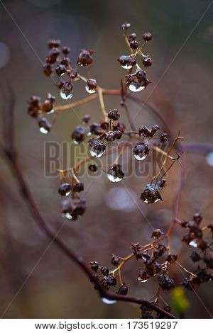 rain drops on a branch. shallow depth of field