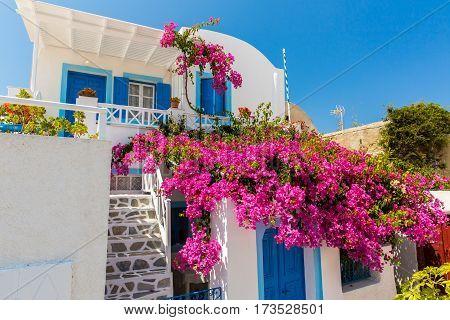 Flowers bougainvillea in Fira town - Santorini islandCreteGreece.