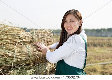 young chinese woman agronomist in golded field