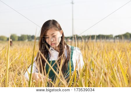 pretty young chinese woman agronomist in golden cereal field