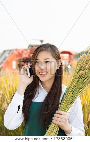 young chinese woman agonomist in golden cereal field with small harvester