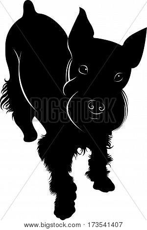 miniature schnauzer miniature dog silhouette pet vector