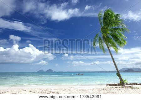 View of nice tropical beach with some palms