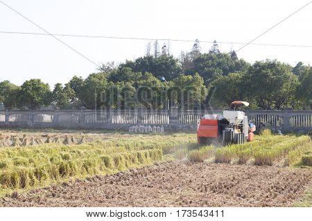 harvester working in golden cereal field