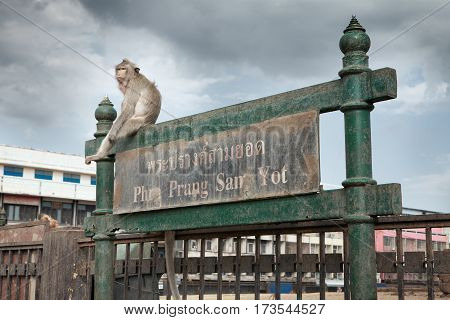 close up portrait of young monkey is sitting on the gate in Lopburi,Thailand