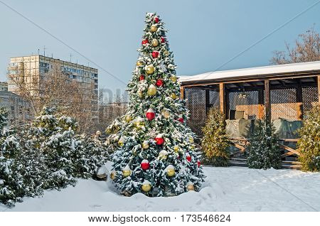 Beautiful snow covered Christmas tree in courtyard in the soft rays of sunset