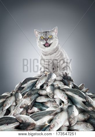view of nice gray cat standing on a hip of fish