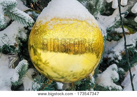 Spangled cold snow young spruce Christmas yellow ball decorations in city park