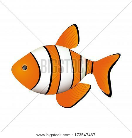 colorful picture clownfish acuatic animal vector illustration