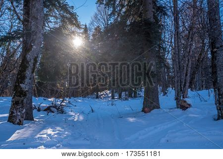 Scenic winter landscape with forest view and pines and firs in front