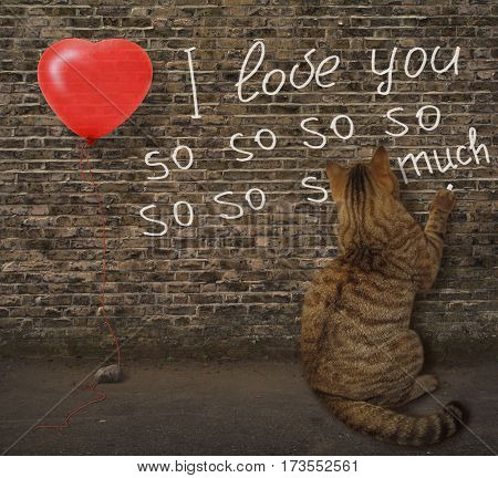 I love you so so so much. It is written on a wall. The cat in love did this.