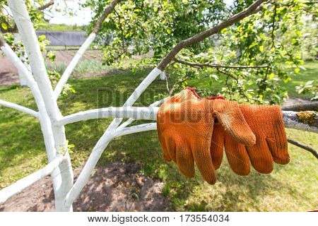 gardener gloves on wood limed. horizontal frame