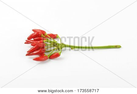 Bunch of fresh red chili peppers on white background