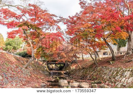 Autumn colors of leaves of trees above small stream.