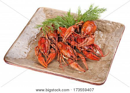 Boiled crayfish with dill on the plate isolated om white background.