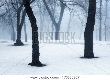 Winter Forest In Fog. Foggy Trees In The Cold Morning
