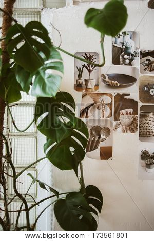 Beautiful decorated wall with photos of ceramic ware and big green plant on foreground