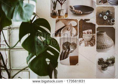 Beautiful decorated wall with photos of ceramic ware and big green plant focus on pictures